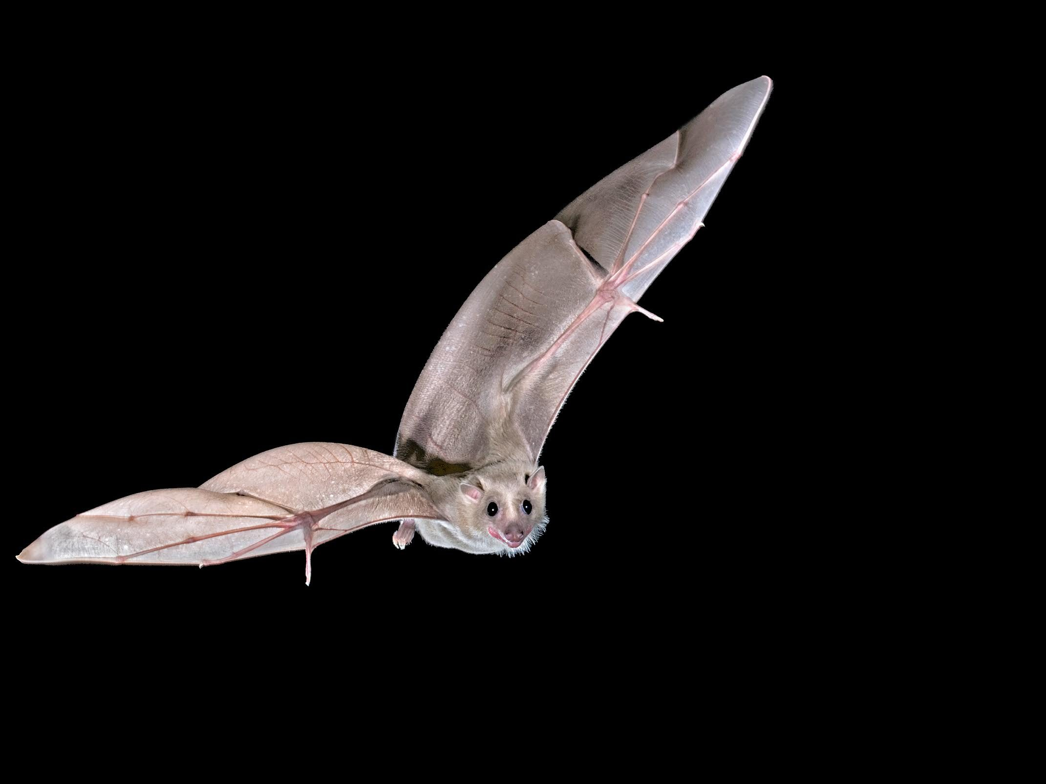 Nature's GPS:  It's Not As Batty As You Think!