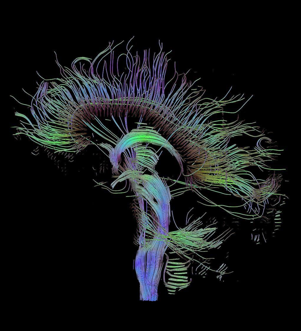 Predicting Human Behavior Using the Brain's Unique Signature