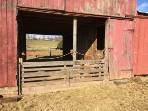 While current therapies aim to remedy the IDH mutations and so stop production of oncometabolites, these carcinogenic molecules have already been released into the body. The research team reasoned that fixing the barn door is useless once the horse has escaped.