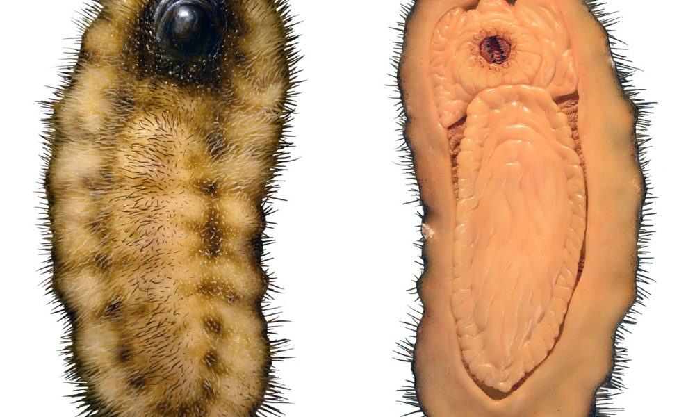 Spiny Slugs: New fossil discovery sheds light on mollusk evolution