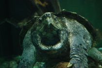 Q&A: Why did turtles come out of their shells?