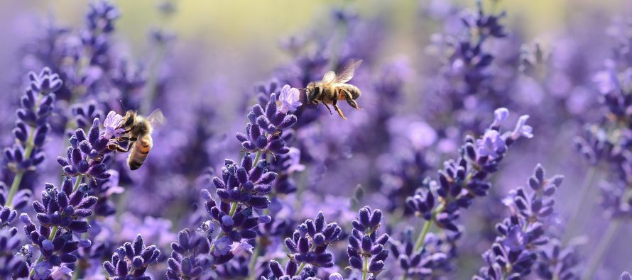 Easy as 1,2,3: Honeybees can learn to add and subtract