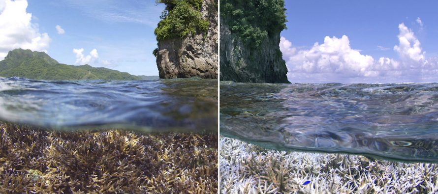 Documentary Review: Chasing Coral