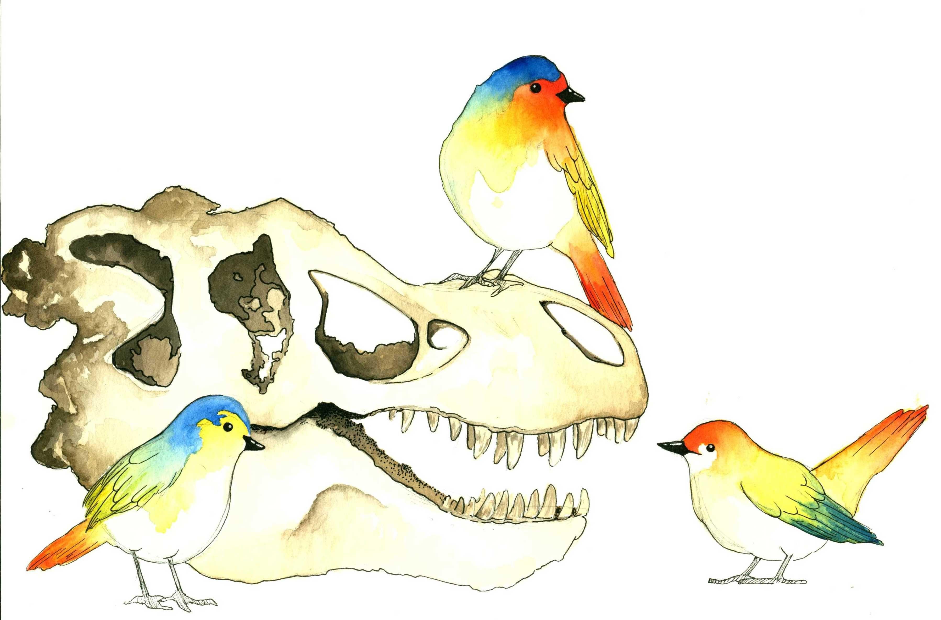 Tracking Transition: From dinosaurs to birds, brain-skull evolution