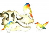 Tracking Transition: From dinosaurs to birds, brain-skull evolution