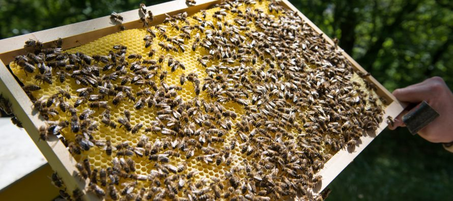 Pesticides, Honey, and Dead Bees: Global honey contamination with neonicotinoids
