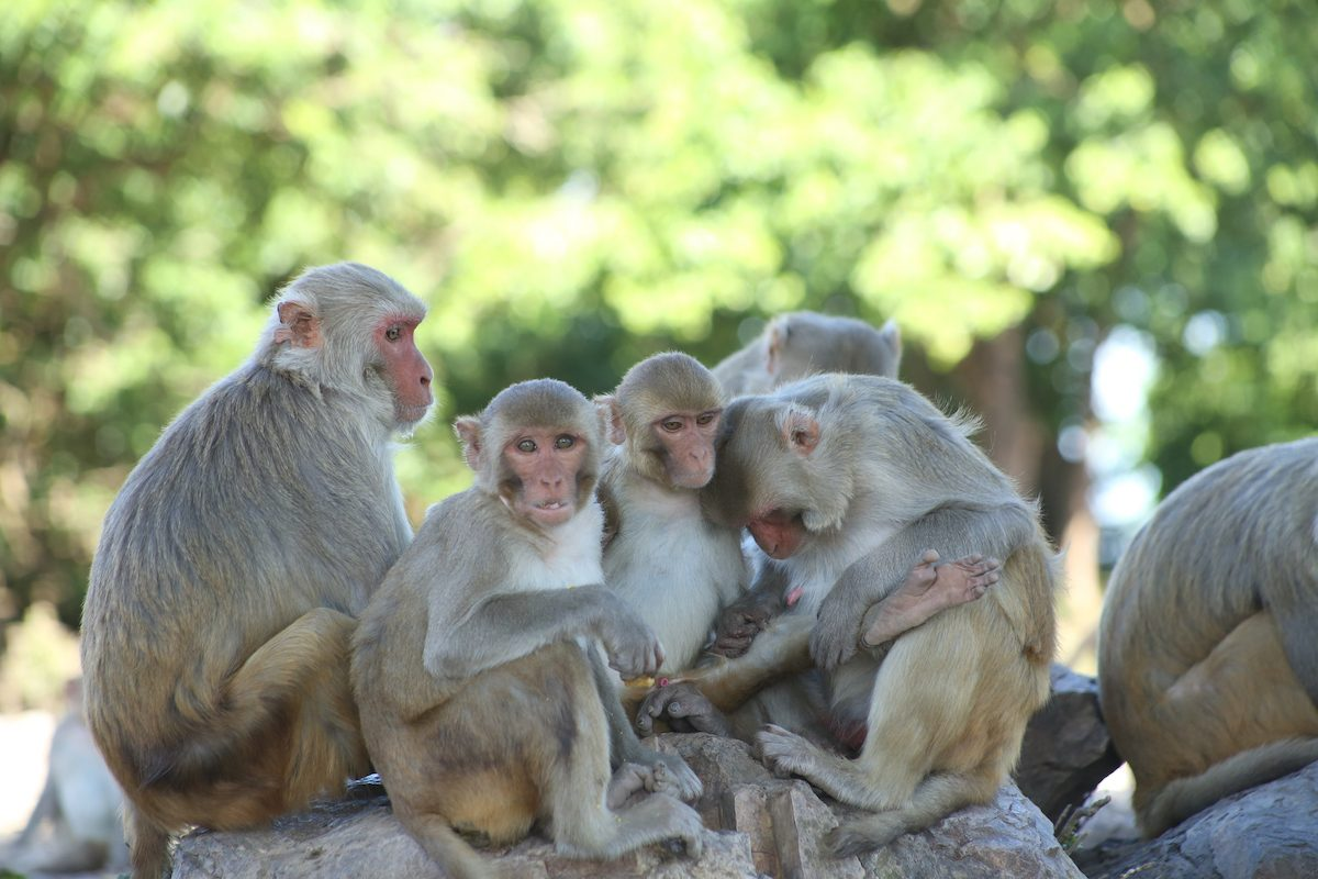 Cayo Santiago: No Monkeying Around