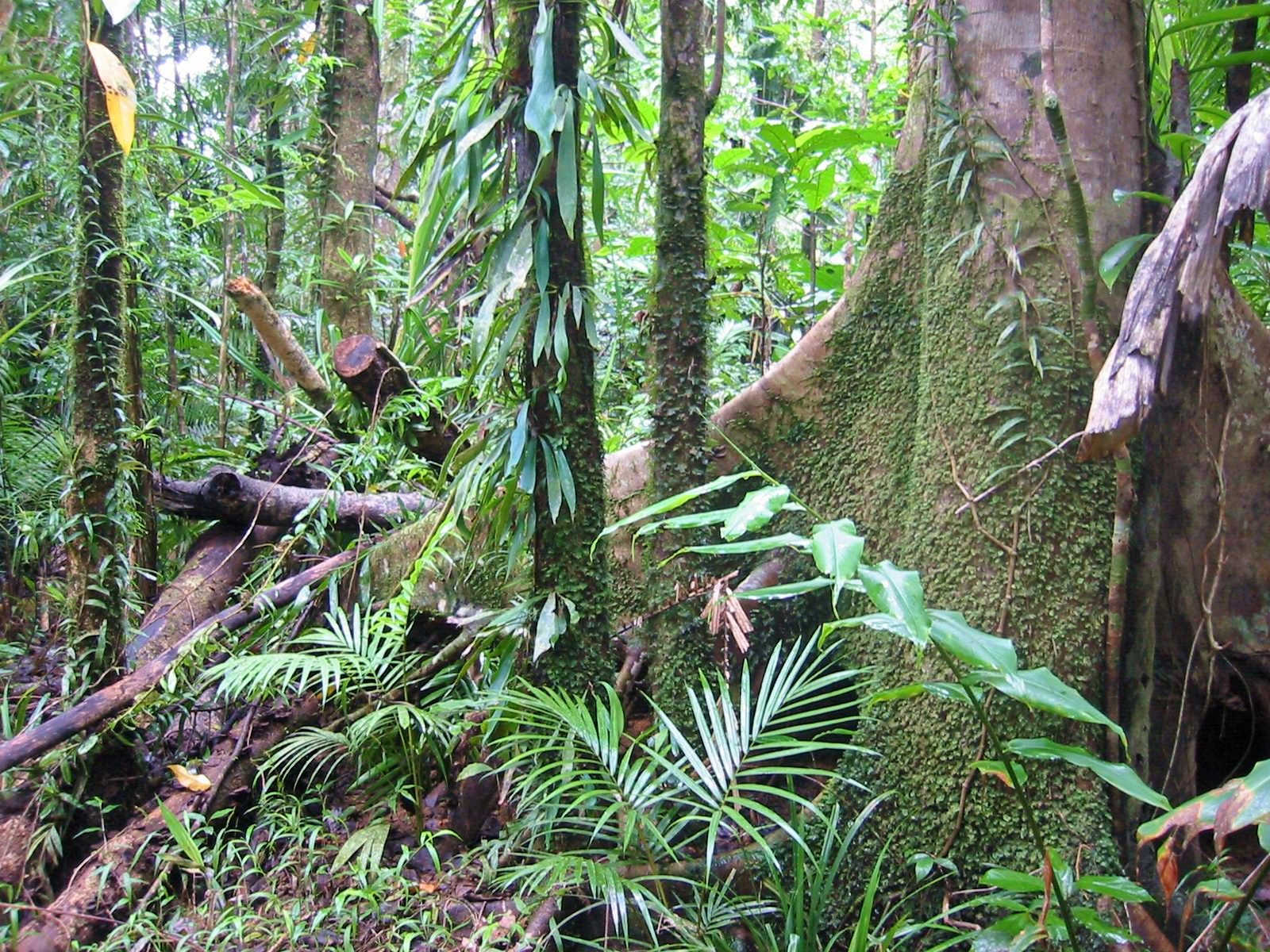 A False Fixation on Nitrogen: How nitrogen-fixing trees may slow forest regrowth
