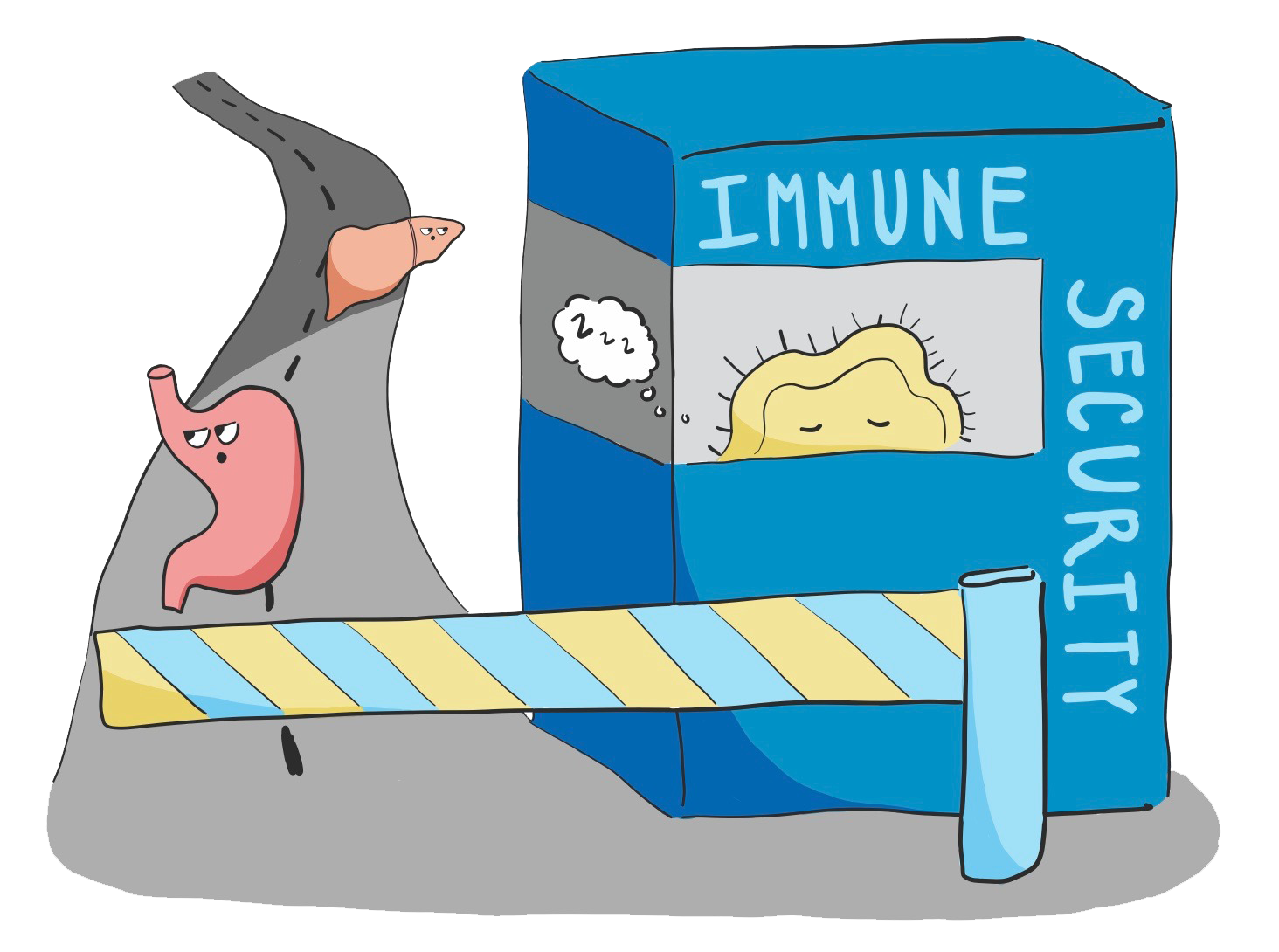 Sneaking Organs Past the Immune System