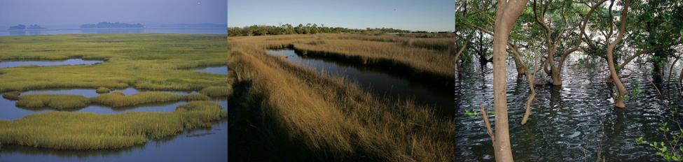 The Confounding Simplicity of Coastal Carbon
