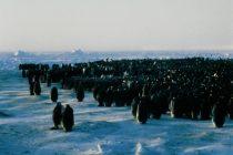 Q&A: Do Penguins Snack?