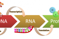 Four-Dimensional Sequencing