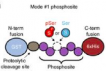 Proteins, Proteomes, and Phosphorylation