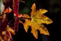 Leaves in 3D