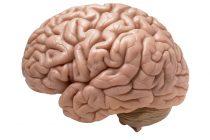 07/15 News Flash 6: COVID-19 in the Brain