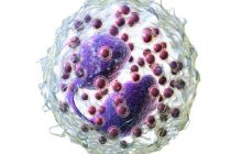 Micro Molecule, Huge Impact: How microRNAs Inhibit Asthmatic Reactions