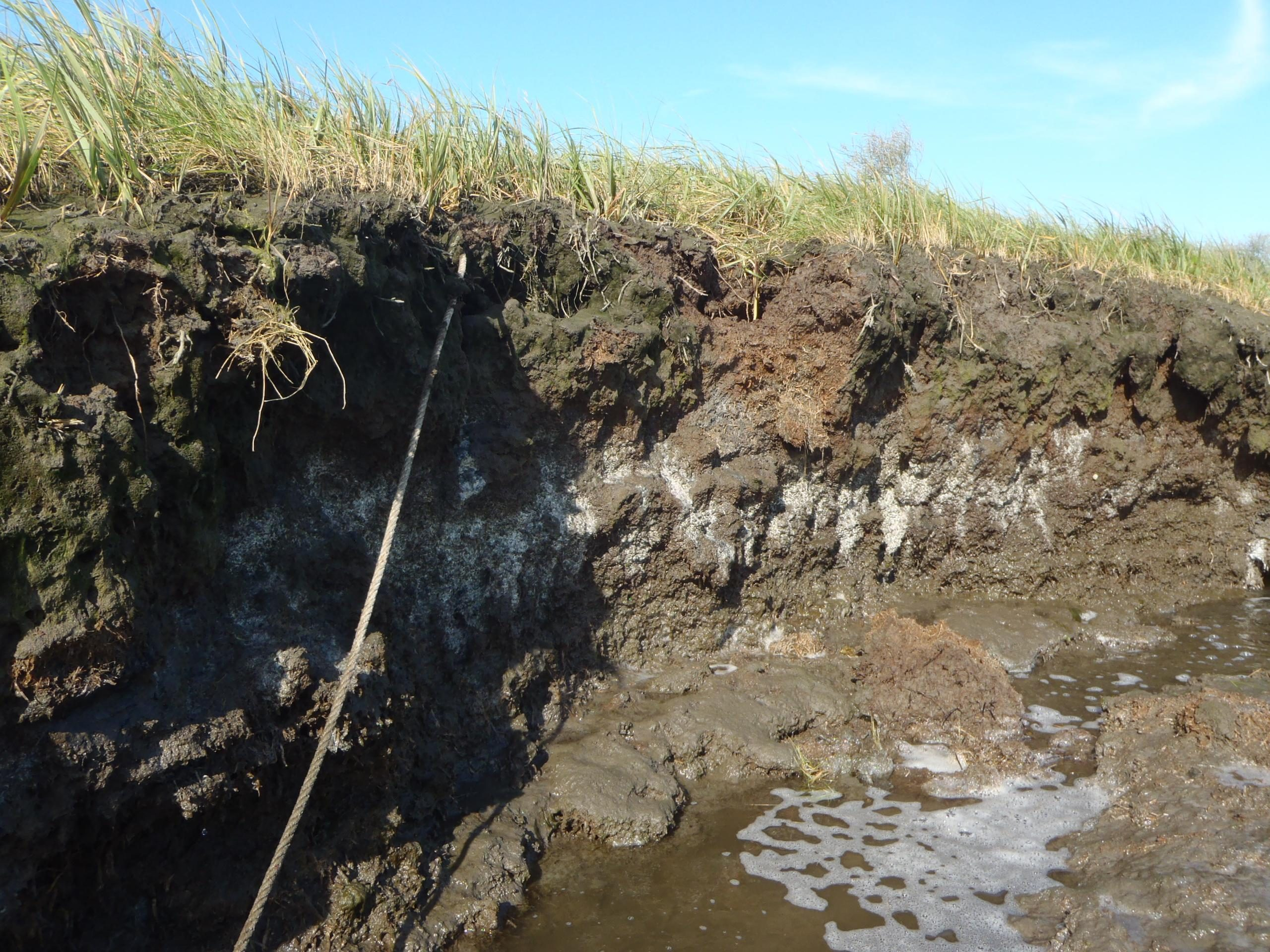 Stubborn Salt Marshes: Nitrate Contamination Prevents Efficient CO2 Processing