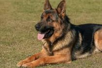 Dogs on Duty: Canine Detection of Plant Pathogens