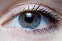 How Mammalian Vision Develops: A Potential Key to Understanding Brain Development