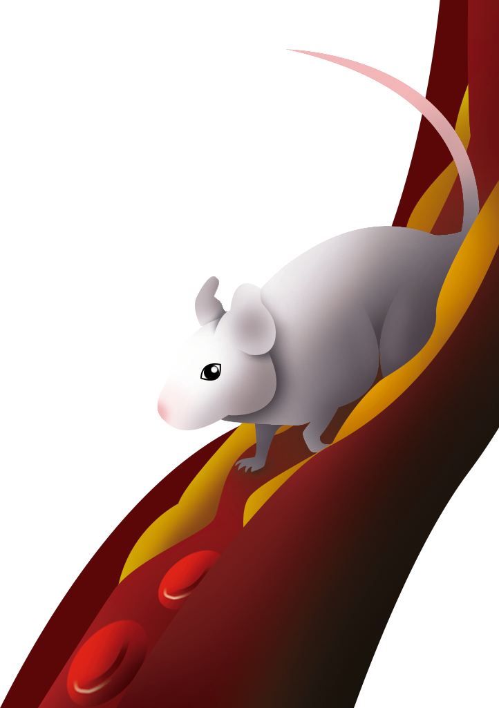 Of Mice and Running Wheels: Physical Activity Mediates the Risk for Atherosclerosis