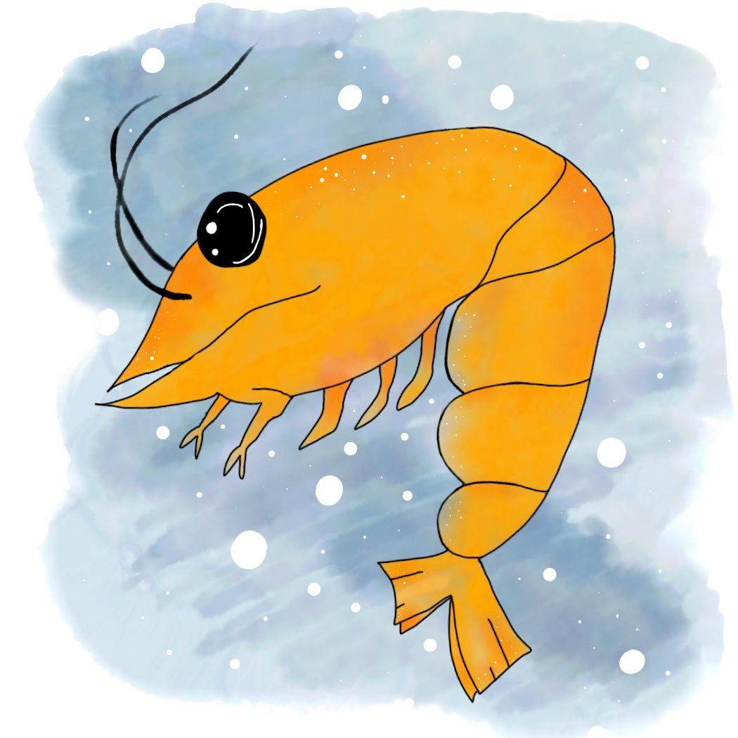 Cocktail Shrimp or Comma Shrimp? What Ancient Shrimp Can Teach Us About Evolution