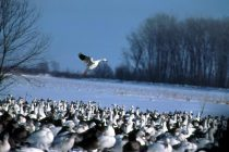 Reconstructing Past Bird Migration Helps Us Plan for Earth's Climate Future