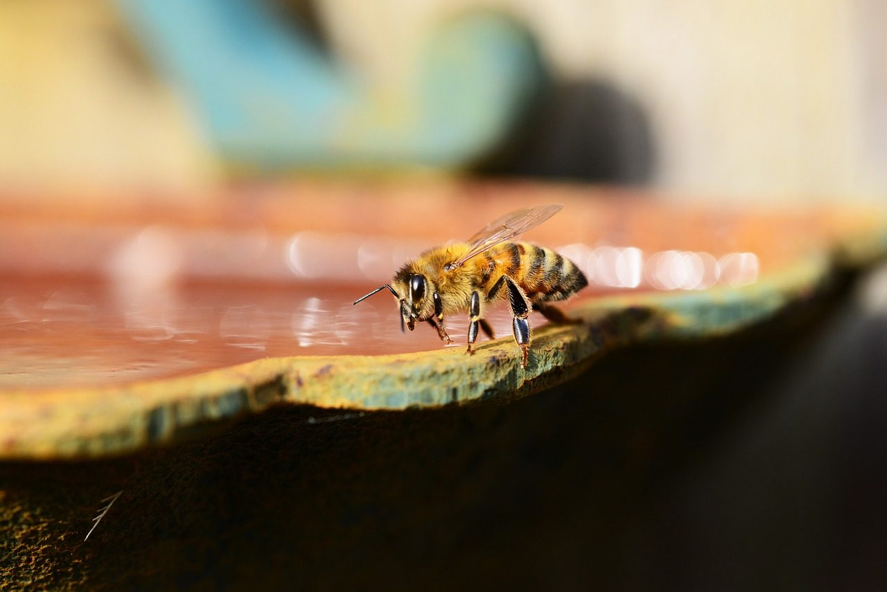An Aerial-Aquatic Vehicle Thanks to Honeybees