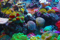 Counterpoint: Revisiting the Effects of Ocean Acidification on Coral Reef Fish
