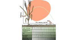 The Role of Death in Plant Life: How does soil organic matter help crop growth?